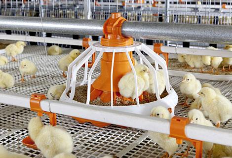 Big-Duchman-Broilerkaefig-broiler-cage-Avimax-Transit_id_01