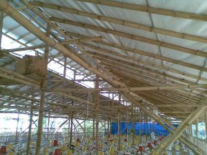 Kandang-Ayam-Atap-Alumunium-Foil
